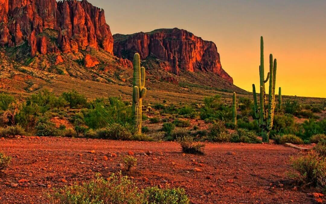 Sonoran Desert Adventure (Top 3 Activities for Visitors)